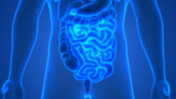 Objawy chorób jelita cienkiego