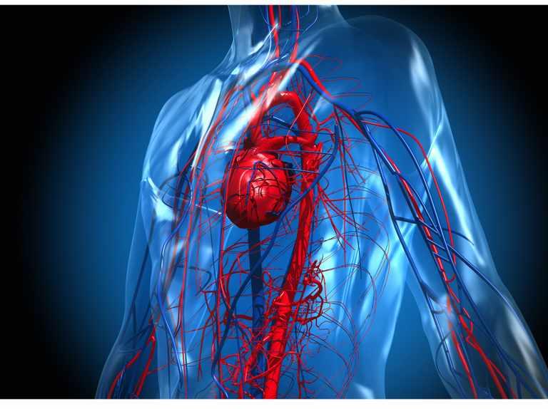 5 porad jak dbać o układ krążenia